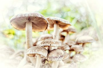 Zusammensetzung der Pilze von Evert Jan Looise