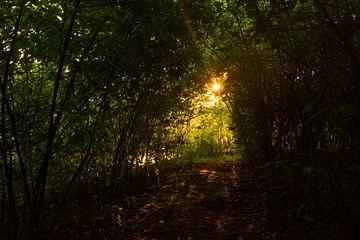 Zon door de bomen van Frans van Dam