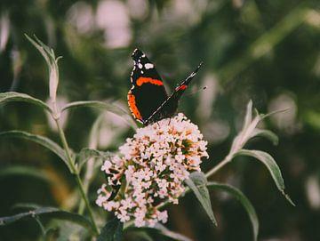 Schmetterling von Laurenz Heymann