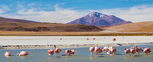 Panorama Hedionda lagune met flamingo's