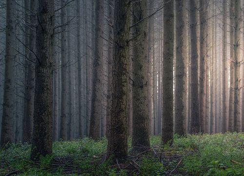 Diep in het bos van Marche-en-Famenne