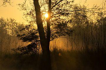 zonsopgang in de Weerribben NP van Karen Klein