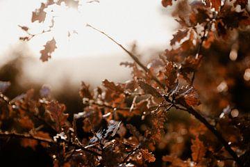 Italiaanse zonsondergang op winter bladeren