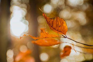 Bladeren in de herfst van Stedom Fotografie