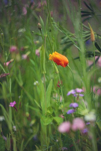 Klaproos tussen de wilde bloemen van Mijke Bressers