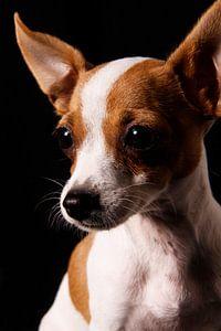 Dog close-up van