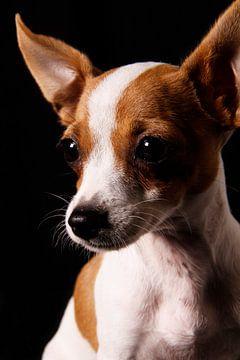 Dog close-up van Iris van Bokhorst
