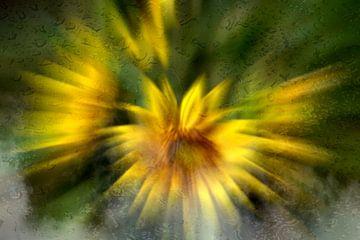 Concept flora : Mistige zonnebloemen van