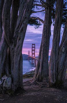Golden Gate Cypres sur Joris Pannemans - Loris Photography
