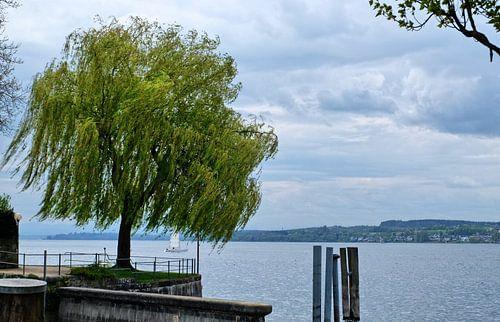 Blick vom Ufer van Edgar Schermaul