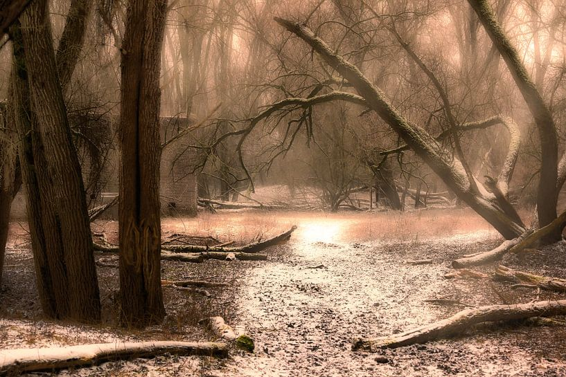 Sneeuw in het bos van Tim Abeln
