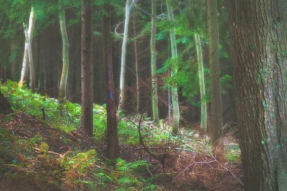 Open plek in het bos