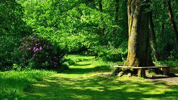 Idyllic Green in Breidings's Garden van Gisela Scheffbuch