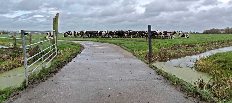Wachten op de boer, het is bijna melktijd van Michiel Leegerstee