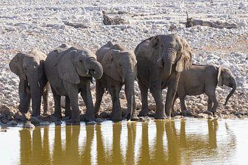 Elefanten im Etoscha-Nationalpark von GoWildGoNaturepictures