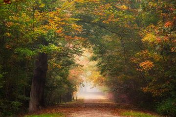 Herfst galerij. van Fabrizio Micciche