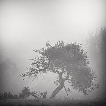 Silhouets 2 von Arjan Keers