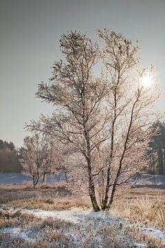 Winterlandschap von