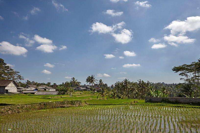 Mooi landschap met rijstterrassen en kokospalmen dichtbij Tegallalang-dorp, Ubud, Bali, Indonesië. van Tjeerd Kruse