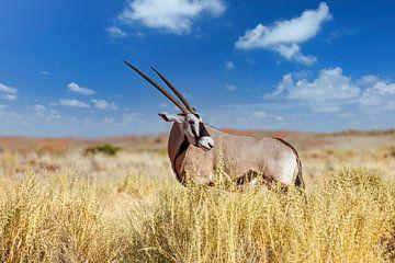 Oryx van Tilo Grellmann | Photography