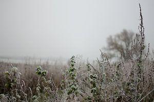 Des plantes gelées dans une douche de gelures sur Bastiaan Buurman