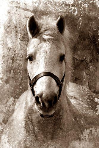 HORSE - SEPIA