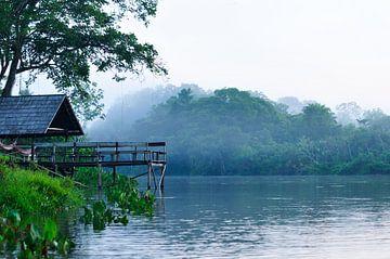 Ochtendnevel in het oerwoud van Thea Oranje