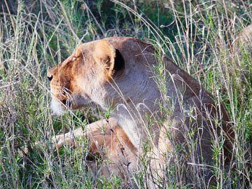 Leeuw in het gras Serengeti van Rianne Magic moments