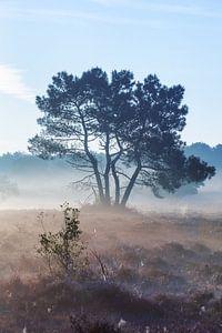 Een van de prachtigste plekjes van 't Gooi: De Zuiderheide tussen Hilversum en Laren van gooifotograaf