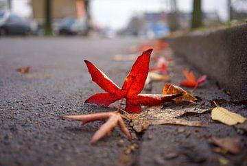 Autumn leftovers van Lex Schulte