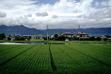 Rijstvelden in Japan von H Verdurmen