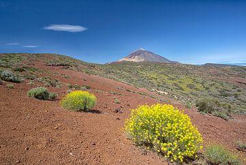Pico del Teide im Frühling von Angelika Stern