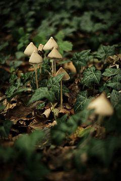 Paddenstoelen in het groene bos | Nederland | Macro-, Natuur- en Landschapsfotografie van Diana van Neck Photography