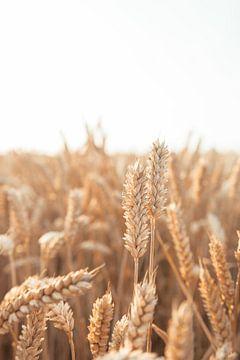 Getreide von Jisca Kuijpers