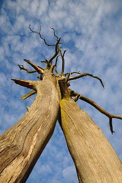 dode bomen reiken naar de hemel van Marc Smits