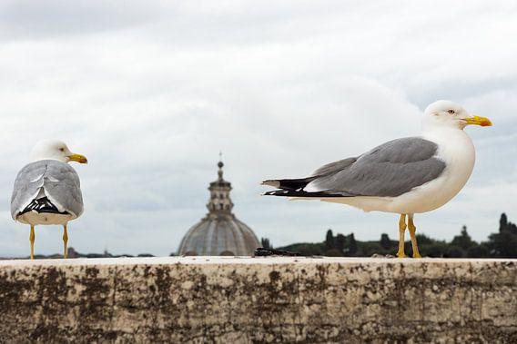 Meeuwen in Rome van Michel van Kooten