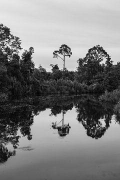 Fluss im Dschungel von Borneo von Geert Keularts