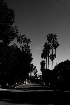 Beverly Hills - Zwart wit von Pleuni van der Pas