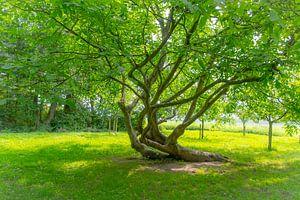 Der Baum von Consala van  der Griend