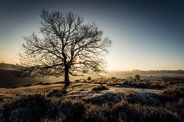 Eenzame boom op de Posbank van Jeffrey Van Zandbeek