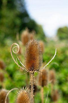 Plant van Jos Venes