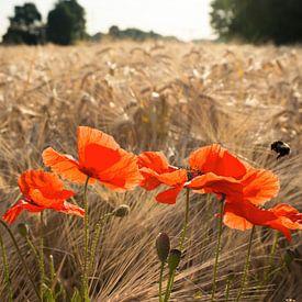Klaprozen in het veld van Joris Pannemans - Loris Photography