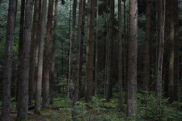 Nadelwald, Ardennen von Monique Pulles