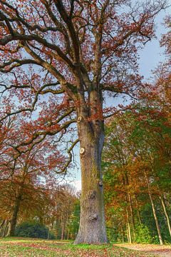 Herfst in Friesland 8. Staniastate in Oentsjerk. van Marcel Kieffer