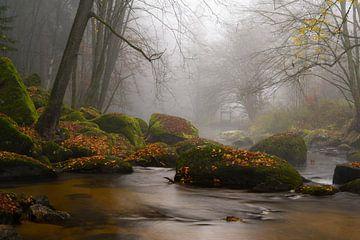 Herbstnebel an der Aist von Peter Felberbauer