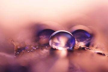 Pink Drops sur Carla Mesken-Dijkhoff