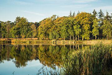 Weerspiegeling bosrand Mastbos in de herfst van Fotografie Jeronimo