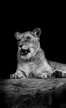 Löwin auf Fels von Esther van Engen