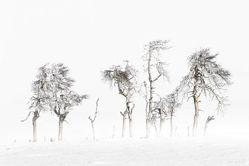 Winter Bomen Hoge Venen van Ingrid Van Damme fotografie