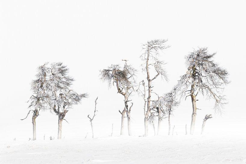 Winter Bomen Hoge Venen van Vandain Fotografie